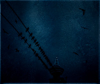 PH2414a folio urban nature Seagulls on the wire with HarbourCentreTower 30x25@300 -8203-5-7-8-10--12-13