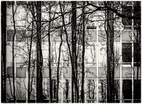 PH2108a folio abstract urban Vancouver tree trunks and windows sfx zf-2127