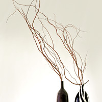 PH1493c still branches in two vases -6510-1-2