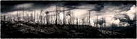 PH1863a burned trees and clouds sfx 55x16 zf-2520-1-2-3-4-5-6-7-8-9