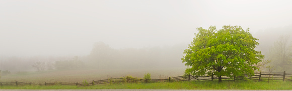 PH1250a tree in fog with fence -3958-9-60