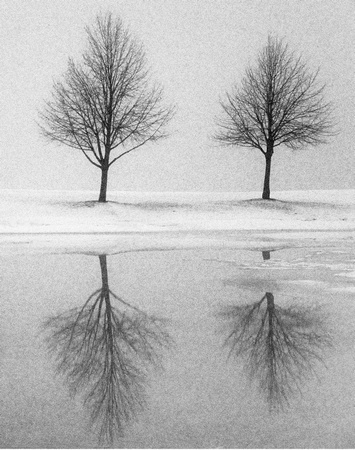 PH057c two trees in winter 1 -20x25
