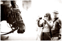PH2362a Horse and tourist   -8602
