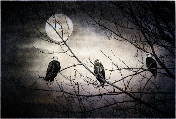 PH2432b birds BaldEagles three under the moon nss -9367-