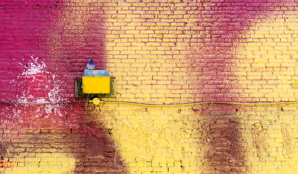 PH2182a pigeon on red and yellow brick wall zf-7177